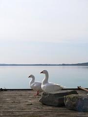 coppia di bagnanti (givanna) Tags: lago pace acqua umbria celeste pontile silenzio lagotrasimeno oche tranquillit isolamaggiore