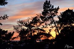 _AKU7119 (Large) (akunamatata) Tags: california sunset berkeley miller trail joaquin joachim