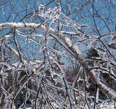 encased 2 (4tun8bug) Tags: winter sun sunlight cold color tree ice outdoors branch shadows bluesky winterstorm panasonicdmclx100