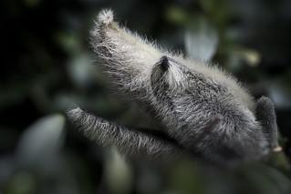 strange creatures, dog in the bushes  (explored)