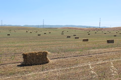 IMG_0609 (mudsharkalex) Tags: california hay bales bale haybale haybales mountainhouse mountainhouseca