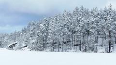 A view from the SE corner of Lake Ruuhijärvi (Nuuksio national park, Espoo, 20160213) (RainoL) Tags: winter sky lake snow pine forest espoo finland geotagged nationalpark february fin 2016 uusimaa nyland esbo velskola ruuhijärvi nuuksionationalpark nuuksionkansallispuisto 201602 vällskog 20160213 geo:lat=6031022345 geo:lon=2457263947