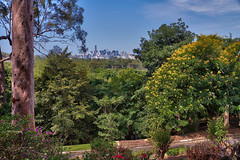 Brisbane city from Mt. Coot-tha botanic garden lookout (Tatters ) Tags: trees australia lookout queensland fabaceae senna mtcoottha sennaspectabilis mcbgb oloneo