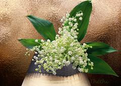140505 bfm 160501  Thethi (thethi (don't like beta groups)) Tags: fleur belgium belgique mai travail vase bouquet tradition fte muguet namur wallonie souhait 1ermai portebonheur ftedutravail faves31