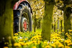 IMG_8727.jpg (vossemer) Tags: de deutschland jahreszeiten natur pflanzen blumen verkehr traktoren frhling blten trecker niedersachsen lwenzahn jork frhjahr