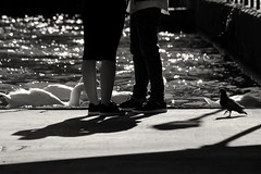 Dnde nos llev la imaginacin? (mrsrosebud) Tags: shadow blackandwhite love blancoynegro water monochrome river monocromo duck shoes couple shadows amor details ducks couples silouette amour pato monocromatic silueta detalles siluetas canard swann patos greyscale silouettes canards greyscales