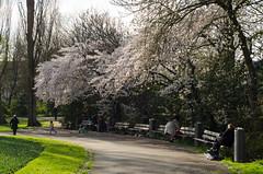 Rotterdam 10-04-2016 SM-24 (Pure Natural Ingredients) Tags: park flowers holland garden 50mm spring nikon outdoor nederland thenetherlands botanic tuin f18 bloemen euromast zuid niceweather voorjaar schoonoord d7000 botanishe