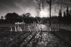 Pflnzchen im Gegenlicht (tobi_digital) Tags: bank bahnhof olympus gras monochrom sonne stein lichtundschatten ritze heusenstamm tag172 365fotosorg