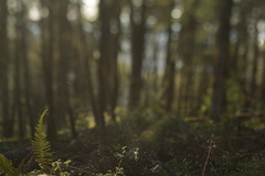 Mount Talbert (Tony Pulokas) Tags: blur fern tree oregon forest portland spring bokeh tilt swordfern mttalbert mounttalbert mounttalbertnaturepark