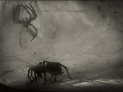 _NIK1942 (nikdanna) Tags: bw spider pentax cobweb bianconero ragno ragnatela nikdanna