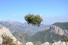 Entdeckungstour auf Mallorca (7) (Schwubb) Tags: holiday tree nature landscape spring nikon warm hiking urlaub natur warmth hike landschaft mallorca baum wandern frhling balearen wanderung wanderurlaub d7000