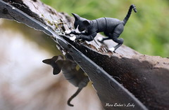Lady (pure_embers) Tags: uk cats pets reflection cute water lady dolls play bjd sphynx pure embers 4cm pureembers bjdpets