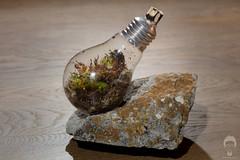 Little Big Planet (Prozac74) Tags: longexposure bulb moss terrarium fullsize cradletograve canonef100mmf28macrousm strobist tungstenbulb canonspeedlite580exii canoneos5ds