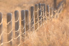 Follow the glittering path (Tracey Rennie) Tags: sunset sun fence bokeh alberta flare barbedwire grasses goldenhour cochrane glitteringpath