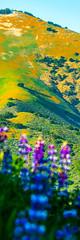 California Spring Wildflowers: Los Padres National Forest - Figueroa Mountain: Dr. Elliot McGucken Fine Art Landscape & Nature Photography: Grape Soda Lupine & California Poppies ! Sony A7RII (45SURF Hero's Odyssey Mythology Landscapes & Godde) Tags: nature fineart wideangle fineartphotography naturephotography wideanglelens naturephotos fineartphotos fineartphotographer fineartnature elliotmcgucken elliotmcguckenphotography elliotmcguckenfineart masterfineartphotography drelliotmcguckenfineartlandscapephotographysonyvariotessartfe1635mmf4zaosslens