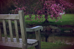 Happy Bench Monday! (NataThe3) Tags: park nature bench spring blossom outdoor blooming