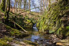 Wooded gully Stream (dalerose1) Tags: wales wooden stream pentax gully k3ii