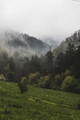fogwoods (spikeROCK) Tags: nature canon exploring slovensko orava slovakia priroda slovak juro 70d kupculak