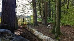 Anton (Oliver Kuehne) Tags: dog chien pet germany bayern bavaria jrt hund anton wald haustier jackrussellterrier