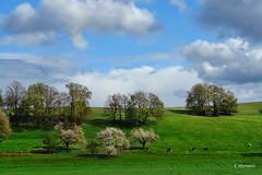 der Frhling (welenna) Tags: blue sky mountains landscape switzerland spring view swiss himmel berge matterhorn baum schwitzerland