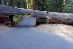 Tunel Log