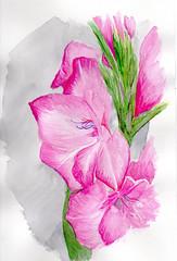 profil floral aquarelle (ybipbip) Tags: flower water fleur watercolor painting paint aquarelle peinture canson watercolour botanique pintura aquarela aquarell acquerello akvarell dalerrowney