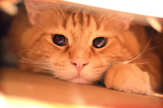 Deep Deep space 2 (moreefox) Tags: cats cat ginger space patrick mainecoon cateyes funnycat