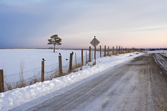 """worth the little space that I take"" (Clever Poet) Tags: road sunset snow black tree birds sign fence sitting dirt lone blackbirds pinks atop purples"