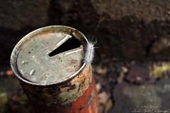 Little explorer (Dave-a-roni (Dark Spot Photography)) Tags: abandoned nikon rust ruin trespassing caterpiller