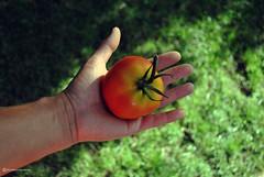 NATURAL (Marco San Martin) Tags: food naturaleza nature kitchen tomato cuisine cinnamon comida scents tomate canela fragrance marcosanmartin