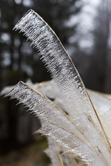 _MG_0964 (schamrock77) Tags: winter italy mountain ice freezing natura inverno montagna friuli ghiaccio galaverna canon6d 35f2is