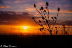 MAN-5932b-2 (Mark-Newman) Tags: sunset brighton devilsdyke