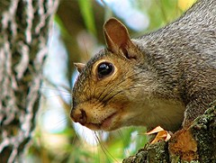 Bright Eyes (wynjym) Tags: ontario squirrels rattray flickrsbest nginationalgeographicbyitalianpeople
