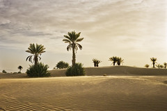 Oasis Sunset (parkerbernd) Tags: africa road travel trees light sunset vacation storm mountains dusty sahara clouds landscape lumix fantastic sand desert offroad dunes north palm panasonic explore oasis morocco valley maroc zagora marokko n9 draa tamegroute gx1 draatal m'hamid