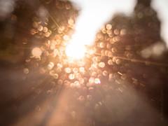 Creativit e filtri (Antonio Crisponi) Tags: sardegna richard e di che antonio ci quel cagliari vita noi vediamo limiti quello vedere pnl bandler filtri soprattutto aspettiamo proviamo provare udire crisponi udiamo