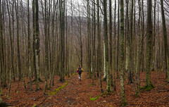 Into the woods (Alessandro Iaquinta) Tags: wood winter friends italy orange mountain mountains nature forest canon eos woods italia colours sunday pic adventure 5d montagna appennino picoftheday 2016 naturephoto landscapephoto 5dmarkiii