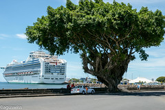 The hottest day I every experienced (aguswiss1 - Thank you for 1'000'000 views) Tags: cruise sea summer vacation hot tree holidays ship princess south cruising line shade samoa southsea humid sapphire oceanliner apia apiasamoasouthsea