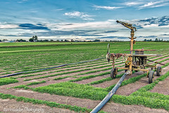 Hawkesbury Turf Farm (darrinwalden Photography) Tags: water grass rural farm australia hose sprinkler windsor agriculture turf irrigation hawkesbury