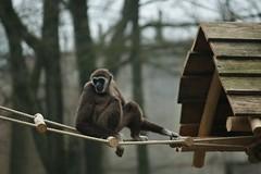 Withandgibbon (tasj) Tags: zoo ouwehandsdierenpark