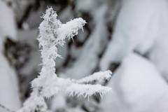 Ice Needles (Laurent Moose) Tags: ice sterreich steiermark eisnadeln eiskristalle gemeindesanktlorenzenbeiknit gemeindesanktlorenzenbeiknittelfeld