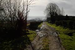 au dtour d'un chemin (vieubab) Tags: nature village lumire hiver champs ombre exploitation paysage campagne extrieur sentier chemin calme escapade haie atmosphre luminosit