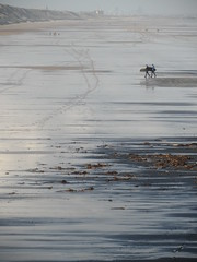 Coal walk (Nekoglyph) Tags: black beach wet silver reflections seaside sand surfer yorkshire cleveland surfboard saltburn seacoal