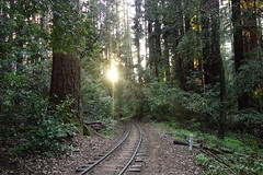 Railroad at sunset (Redwood Reverence) Tags: california santa ca railroad trees sunset sun tree set forest train evening woods path clinton rally tracks henry cruz choo fir felton redwoods curve trump cowbell roaring sanders 2016