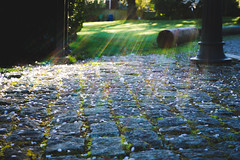 (David Does) Tags: light stone rocks path blossoms cobblestone filter cherryblossoms rays sunrays