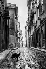 Gato Preto (Fabian Tommarello Lpez) Tags: portugal porto oporto gatonegro gatopreto gattonero