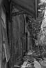 IMG_7132 (ydnA uaL) Tags: istana woodneuk
