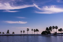 Clouds, Palms, And The Sea: Miami, FL (Louise Lindsay) Tags: trees seascape flower water leaves fruit clouds children landscape bay pond lotus miami lagoon palmtrees iguana fl lilypads mathesonhammock 3616 31616 fiarchildgardens