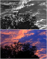 Sunrise Diptych 1 April 2016 (JayVeeAre (JvR)) Tags: morning sky cloud colour sunrise dawn blackwhite diptych picasa3 johnvanrooygmailcom johnvanrooy colourandblackwhite gimp28 canonpowershotsx60hs johannesvanrooy httpwwwflickrcomphotosjayveeare httpwwwpanoramiocomuser1363680 httppicasawebgooglecomjohnvanrooy ©2016johannesvanrooy