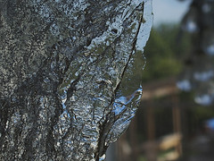 2016-04-17 Looking through the ice (Mary Wardell) Tags: texture ice melting slice thin