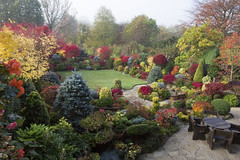 Autumn colours at entrance to our garden (Four Seasons Garden) Tags: york uk flowers blue autumn red england colour green english leaves yellow stone garden four japanese maple seasons award foliage national begonia paving deciduous winning walsall 2015 yorkstone acers